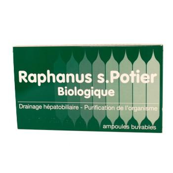 Raphanus S. Potier Biologique
